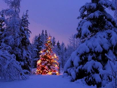 Новый год встретили с елками